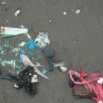 فاجعه زیست محیطی و خطرانقراض گونه های ماهیان دریای خزر+عکس