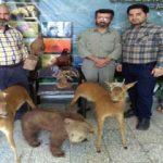 دستگیری شکارچیان متخلف در آمل