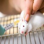 تکثیر و پرورش موشهای آزمایشگاهی برای مراکز دانشگاه وموسسات تحقیقاتی در داخل کشور