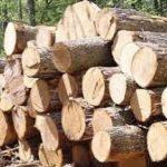 کشف ۲ تن چوب جنگلی قاچاق در آمل