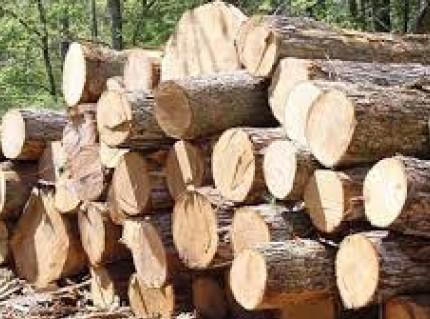 توقیف خودرو حامل چوب جنگلی قاچاق در محور هراز