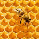 مدیرجهادکشاورزی شهرستان آمل:فعالیت درزمینهٔ زنبورداری علاوه بر ایجاد اشتغال مولد ،باعث افزایش باردهی محصولات کشاورزی میشود
