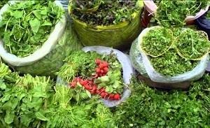 اشتغالزایی ۵۰ نفره با کشت سبزی ارگانیک در آمل